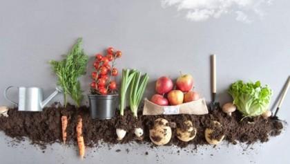 Gıda lojistiği
