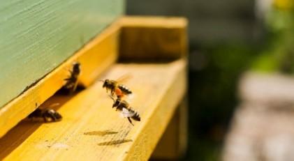 Arı kovanı